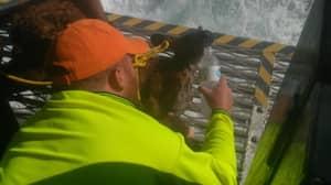 Fishermen Rescue Kangaroo Found Nearly A Kilometre Out To Sea