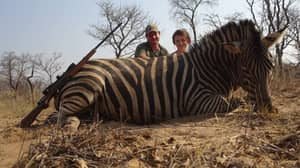 Animals 'Bred To Be Killed' For As Little As £170 On Trophy Hunting Experience