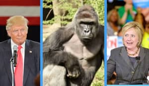 Some Americans Would Rather Vote For Harambe Over Donald Trump And Hilary Clinton