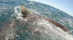 Video Captures Shark Almost Biting Teen's Hand Off While Spearfishing