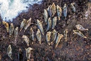 Stunning Photo Shows Dozens of Seals On Scottish Island