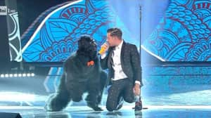 An Ape Will Be Performing At The Eurovision Song Contest Tonight