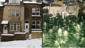Police Find £80,000 Cannabis Farm After Noticing Roof With No Snow
