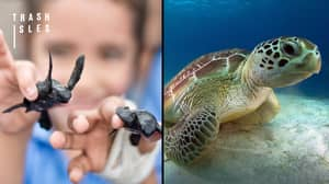 Research Finds That Our Trash Is Killing More Turtles Than Oil Pollution