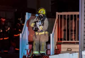 Hero Cat Defies Dog-Loving Naysayers By Waking Up Owner During House Fire
