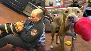 Dog Abandoned By Family Is Adopted By Firefighters Who Saved Her