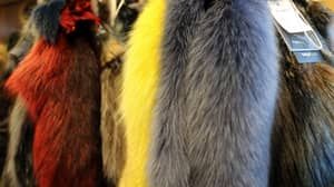 Ministers Considering Banning Import Of Animal Fur To UK After Brexit