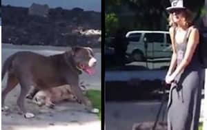Pit Bull Attacks And Kills A Small Dog While Its Devastated Owner Looks On