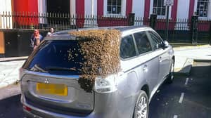 20,000 Bees Chased This British Car For Two Days Straight