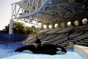 Schoolboy From Devon Admits To Hacking The SeaWorld Website