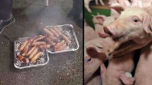 Piglets Saved From Fire, Then Served As Sausages To Firefighters Who Rescued Them
