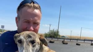 Ex-Marine's Staff Left Behind As He's Evacuated From Kabul With Cats And Dogs