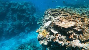 Australian University Students Now Have The Opportunity To Visit And Save Coral Reefs As Part Of Their Studies