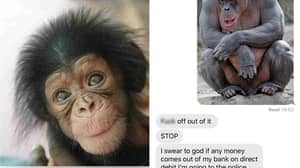 Woman Tricks Man Who Gave Her His Number Into Thinking He's Adopted A Chimp