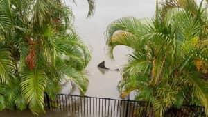 Bull Shark Spotted Swimming Near Man's Back Yard During Flash Floods