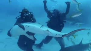 Mike Tyson Immobilises Shark During Discovery Channel's Shark Week
