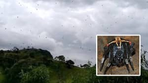 Thousands Of Spiders Appear To 'Rain From The Sky' In Brazil