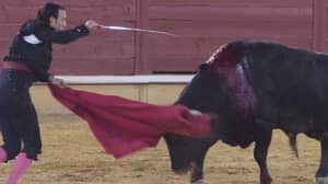 Spain's First Bullfight Since Lockdown Prompts Fresh Calls For Ban