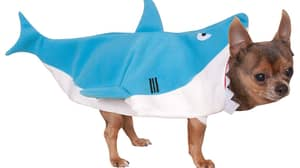 This Costume Will Turn Your Dog Into Your Very Own 'Baby Shark'