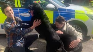 Labradors Stolen In Broad Daylight Are Reunited With Family