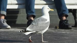Seagulls Are Getting Drunk And Making Fools Of Themselves