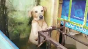 Rescuers Save Dog From Floodwaters After It Was Found Clinging To A Building