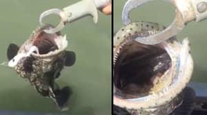 Watch As Aussie Bloke Finds Deadly Snake Inside Fish