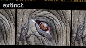 Extinct: A Race Against Time To Save Our Endangered Species