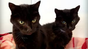 'Britain's Oldest Cat Brothers' Rehomed At 21