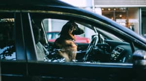 Row Breaks Out After Woman Opens Stranger's Car To 'Save Dog' In 30C Degree Heat