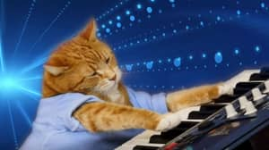 Bento The Keyboard Cat Has Sadly Passed Away
