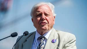 Two New Documentaries Featuring David Attenborough Are Being Produced