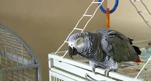 Parrot Who Allegedly Witnessed A Murder Can't Stop Muttering The Same Three Words