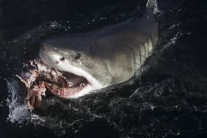 Shark Drags Camera Off Into The Ocean After Taking The Bait