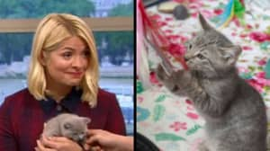 Holly Willoughby Brilliantly Shuts Down 'This Morning' Guest Who Wants Cats Banned