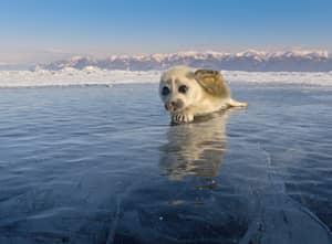 Photographer Waited Three Years To Capture Baby Seal On The Ice