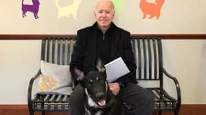 'Indoguration' Will Be Held To Celebrate First Rescue Dog In White House