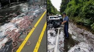 Truck Carrying 13 Containers Of Eels Tipped Over - This Is The Stuff Of Nightmares