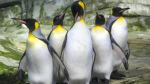 Two Gay Penguins Adopt An Abandoned Egg At Berlin Zoo