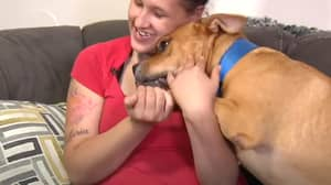 Woman Looking For Dog To Adopt Finds Pet Who Disappeared Two Years Ago