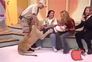 Shocking Video Emerges Of Lion Pouncing On Child Live On Air