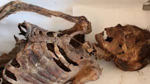 New Pictures Show The Finer Details Of The Mongolian Mummy With 'Adidas Trainers'
