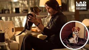 John Wick's Puppy Killed In First Movie Now Called 'Wick' And Loving Life With New Family