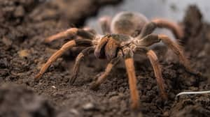 Spiders Have Tiny Paws And Now They're Kind Of Cute