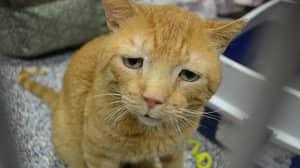 Nutmeg 'The World's Saddest Cat' Given Loving New Home