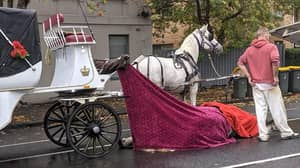 Horse Dies In North Melbourne After Collapsing While Pulling Carriage