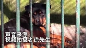 Zoo In China Accused Of Trying To Pass Dog Off As Wolf