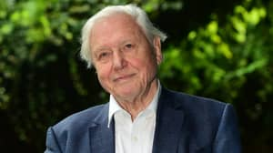 David Attenborough Is Presenting 'Urgent' New Film On Climate Change, Airing This Spring