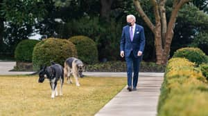News Channel Accuses President Joe Biden's Dog Of Not Being 'Presidential'