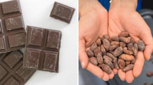 Professor Says Chocolate Is Better For You Than Cough Syrup